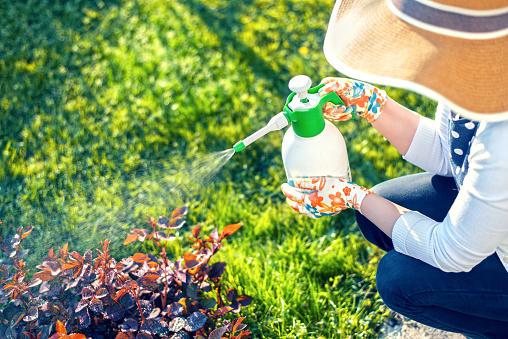 eliminer-les-mauvaises-herbes-de-votre-pelouse
